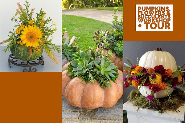 October 17, 2020 - Pumpkins, Succulents + Flowers Workshop + TOUR
